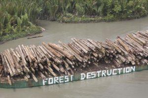 O desmatamento na Nova Guiné, registrado pelo Greenpeace, é um exemplo da relação insustentável entre o homem e a natureza