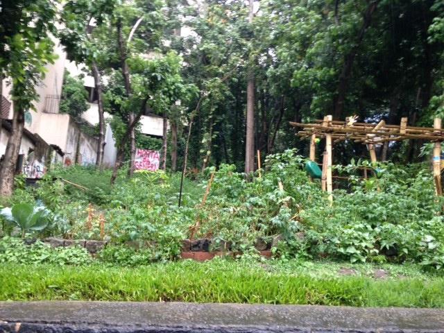 A 'Horta da General' reúne moradores de Laranjeiras em torno de um projeto comum. As regras de convivência estão publicadas nas redes sociais