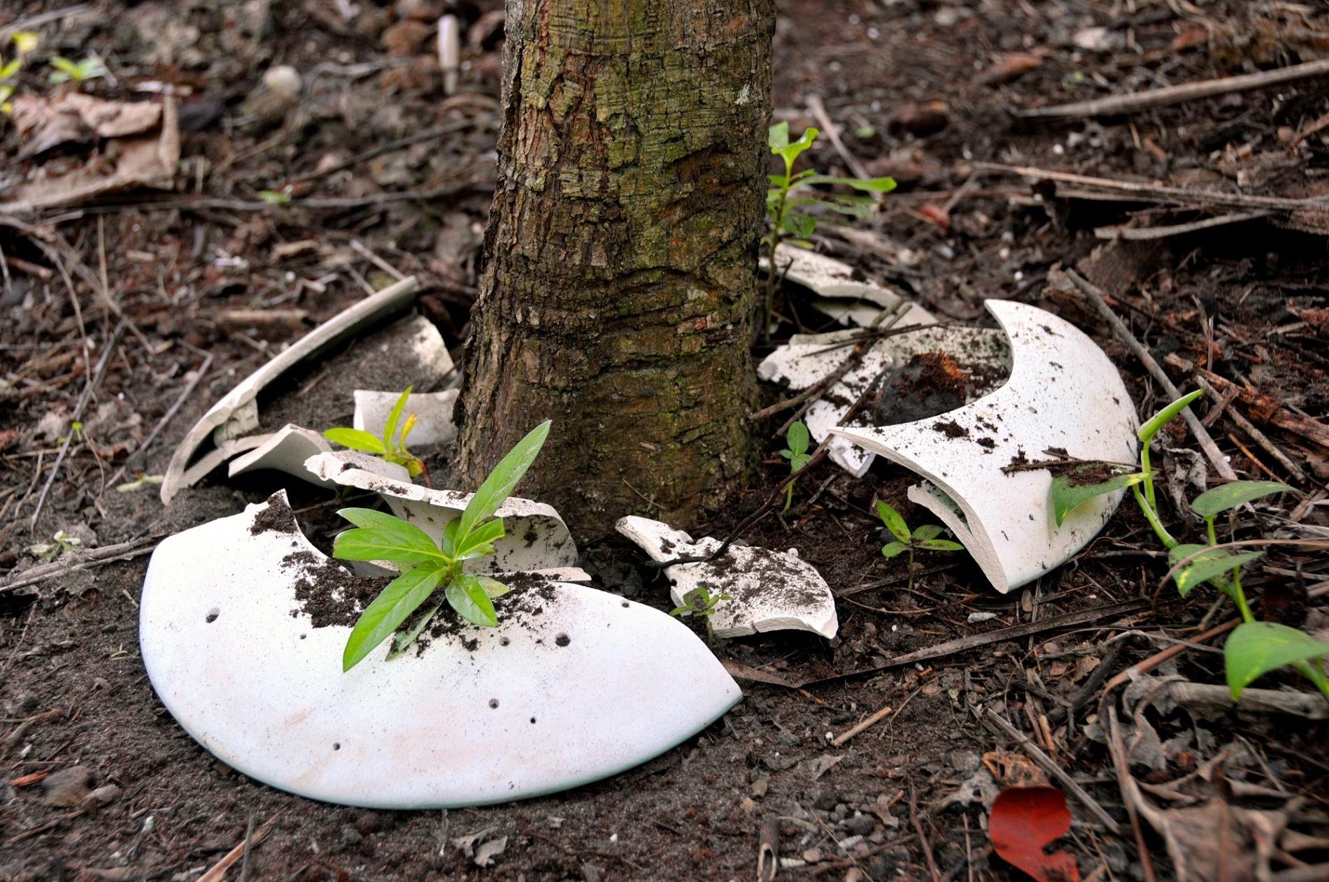 A Spíritree é uma urna biodegradável que se transforma em memorial vivo na forma de uma árvore