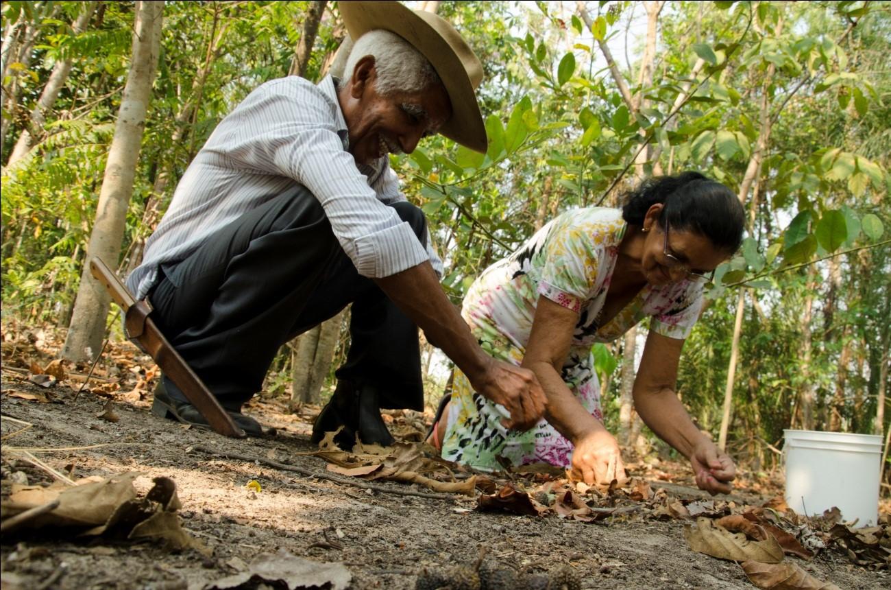 Coletores de sementes trabalhando em campo: já são mais de 400 os integrantes da rede
