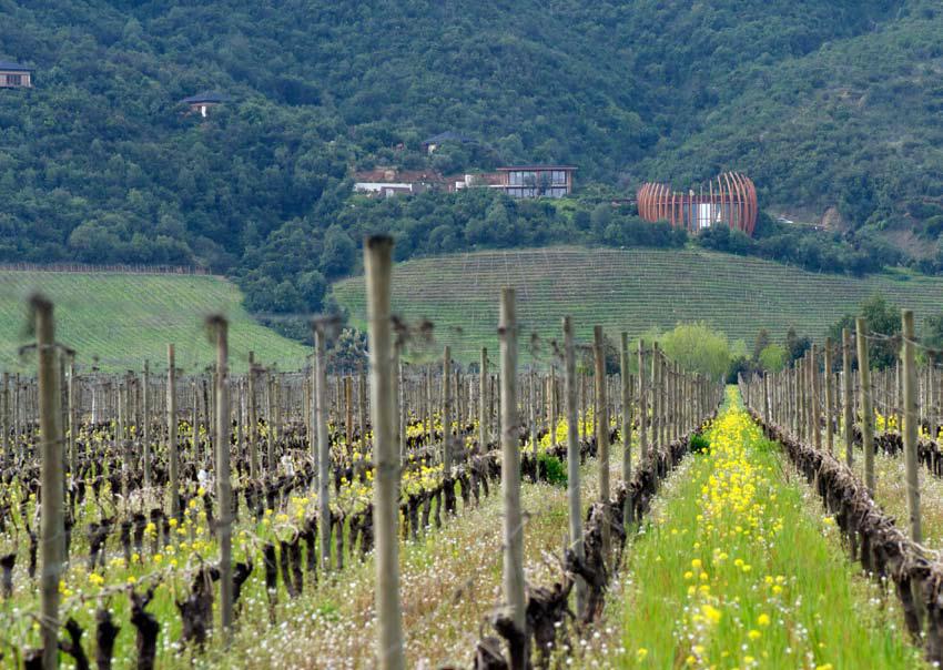 No Lapostolle, a apicultura é combinada com vinhedos e agricultura orgânica
