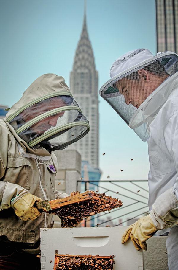 No Waldorf Astoria, apicultores cuidam das hóspedes ilustres
