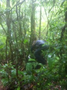 pesquisador no meio da mata procurando anfibio-Foto de Marcio P