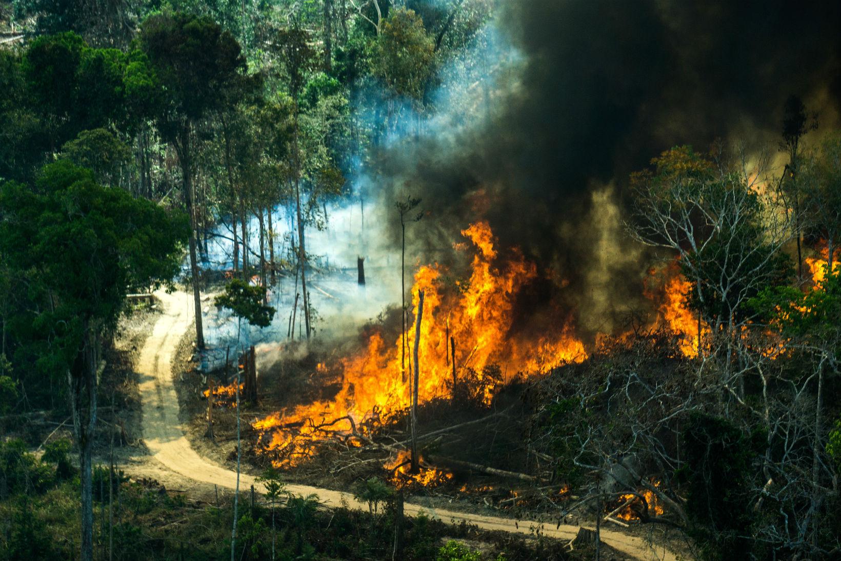 Queimada. Foto de Rogério Assis/Greenpeace