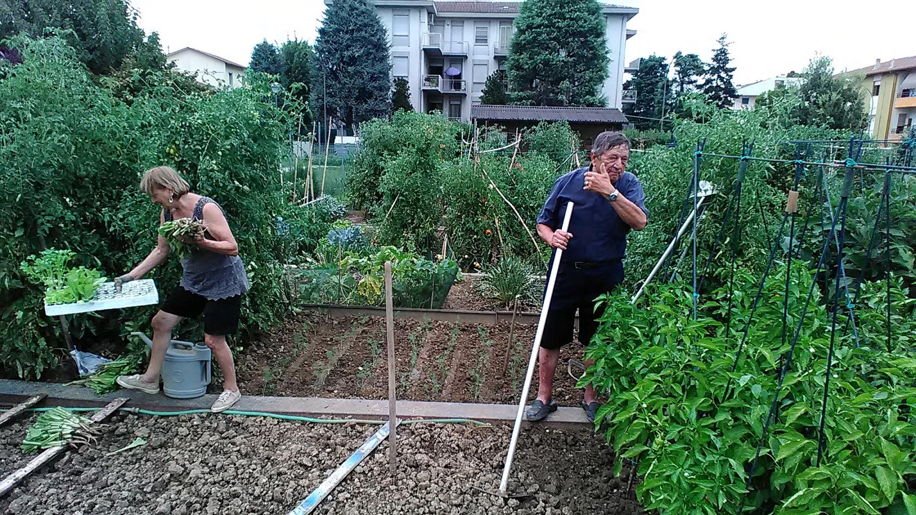 Em Forli, há 17 hortas cedidas a idosos, que buscam com o trabalho se sentirem ativos. (Foto Luciana Doneda)
