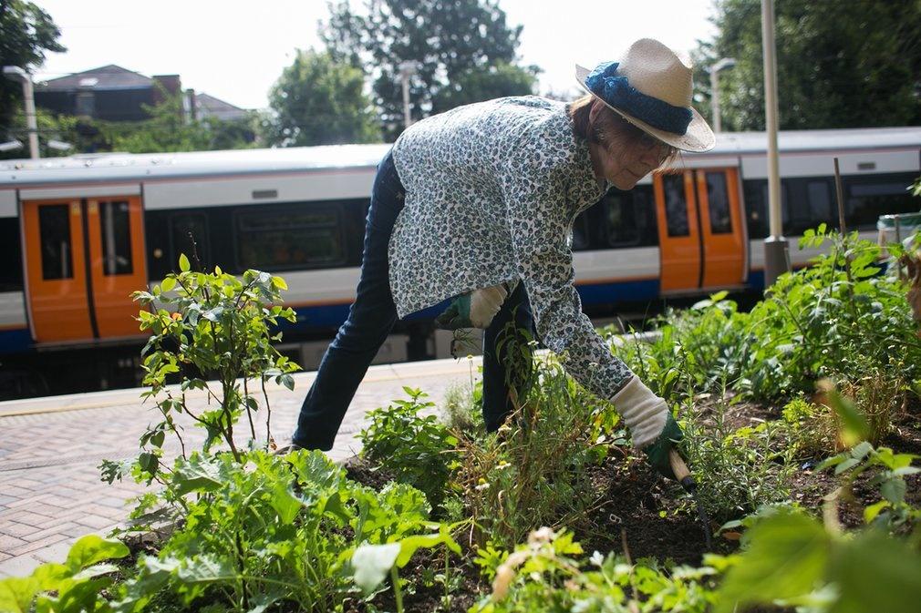 Horta comunitária na estação de Hamstead Heath, no Norte de Londres. Foto Divulgação/Energy Garden