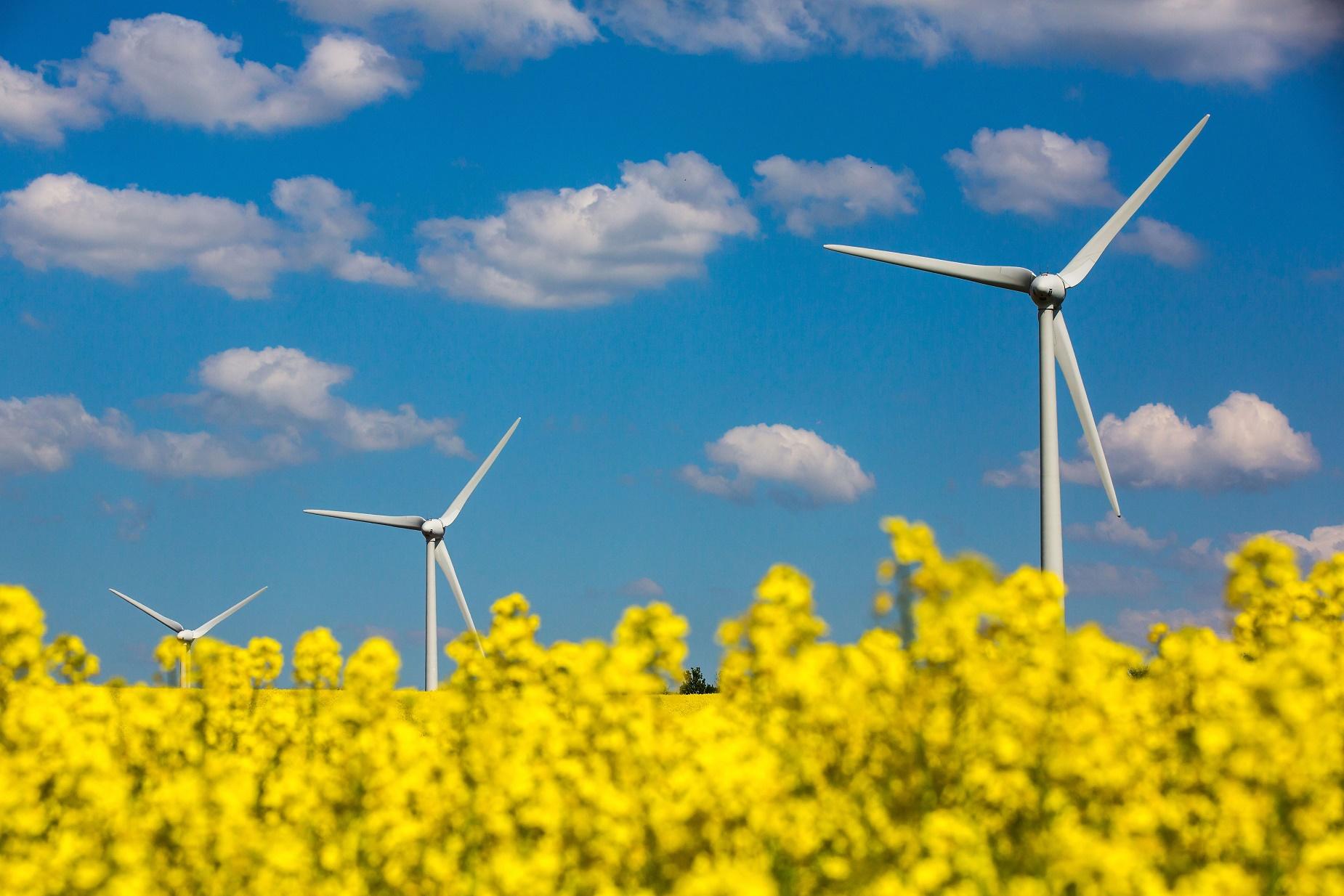 Turbinas eólicas num campo de canola próximo de Molsdorf, ma Alemanha. Foto de Michael Reichel/DPA