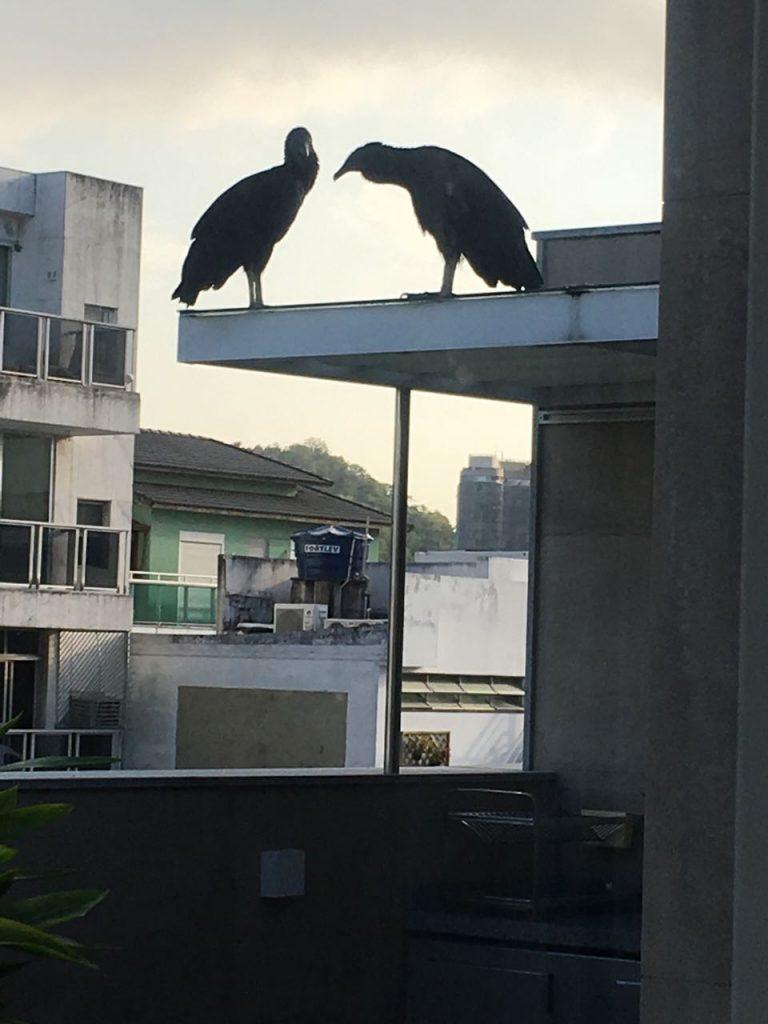 Tomar o café da manhã vendo um bicho preto, de 1,3 metro de altura e cara de poucos amigos na janela não é exatamente o sonho do ipanemense. Foto de Morador