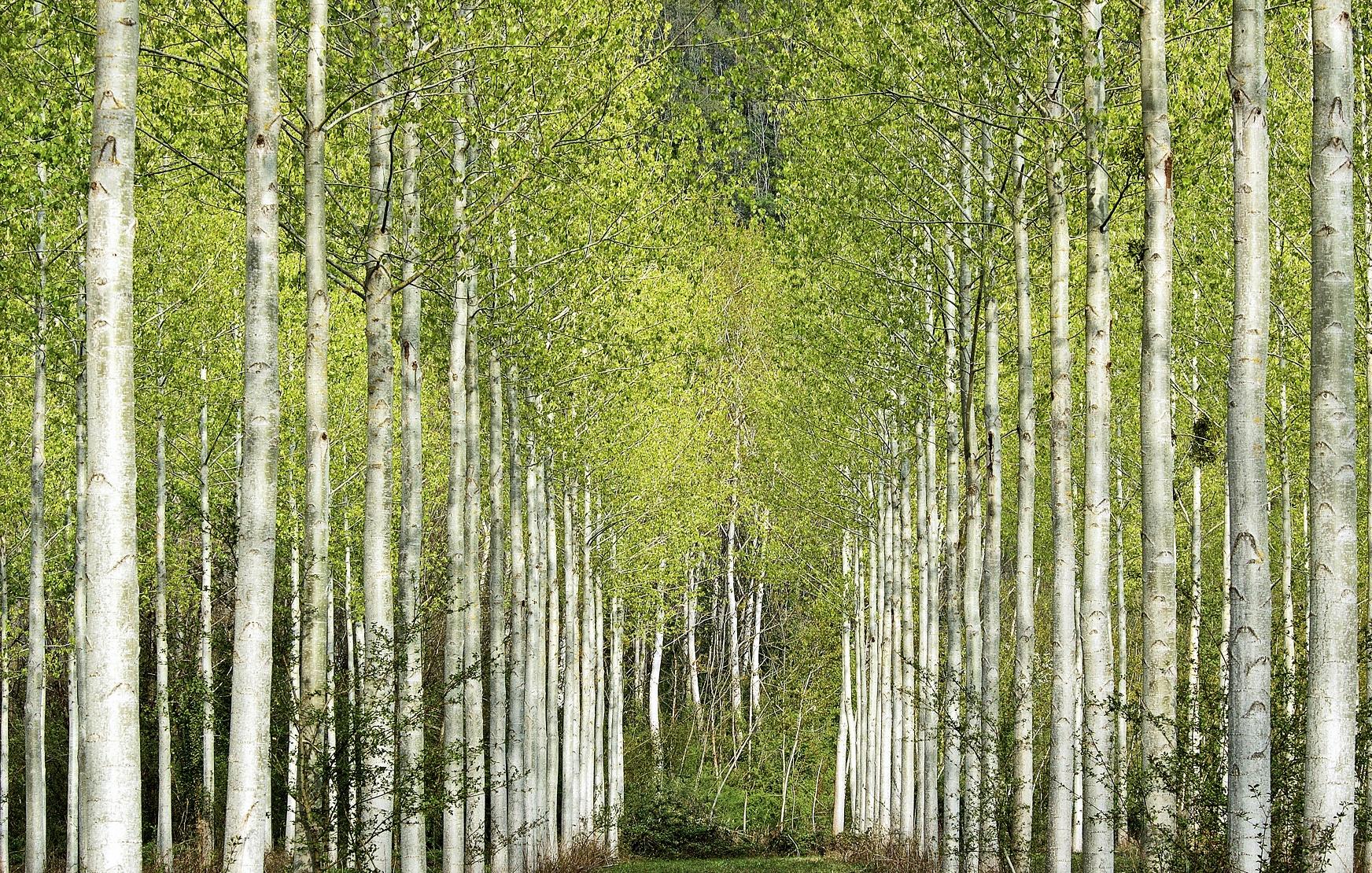 Projetos de restauração florestal, gestão hídrica e energia renovável estão entre as melhores oportunidades para investimentos ambientais. Foto de Jean-Philippe Delobelle/Biosphoto