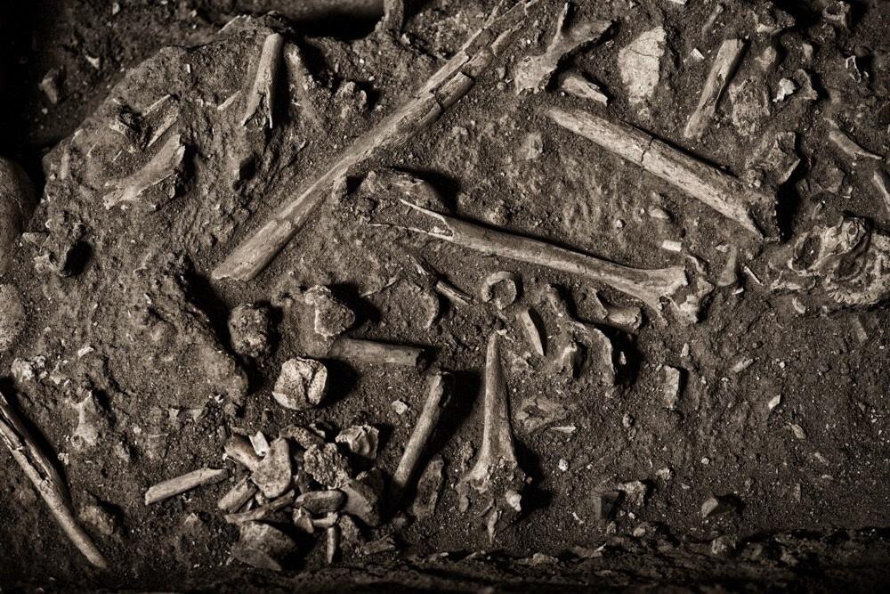 Muitos dos escravos morreram nos navios, antes de chegar ao Brasil. Foto de Alex Ferro