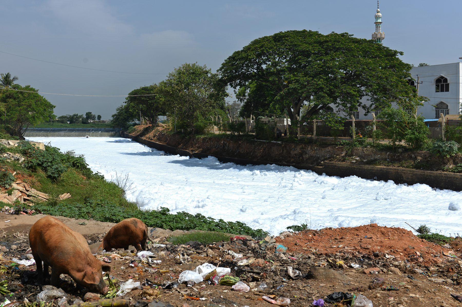 Lago de Bellandur poluido. Foto de Manjunath Kiran/ AFP