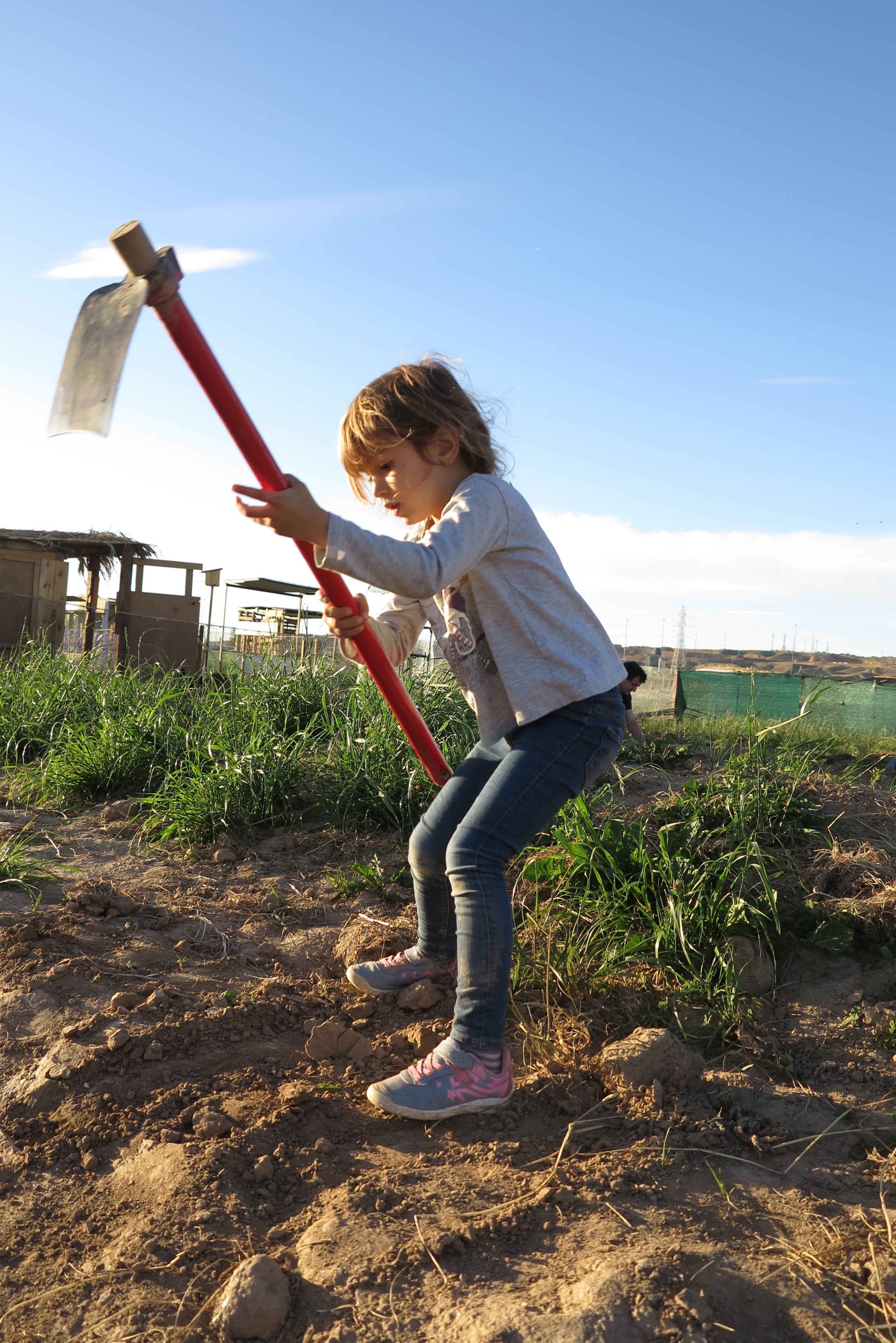 Dá trabalho: para manter a horta viva e produtiva é preciso dedicação e paciência - até dos pequenos (Foto Rosane Marinho)