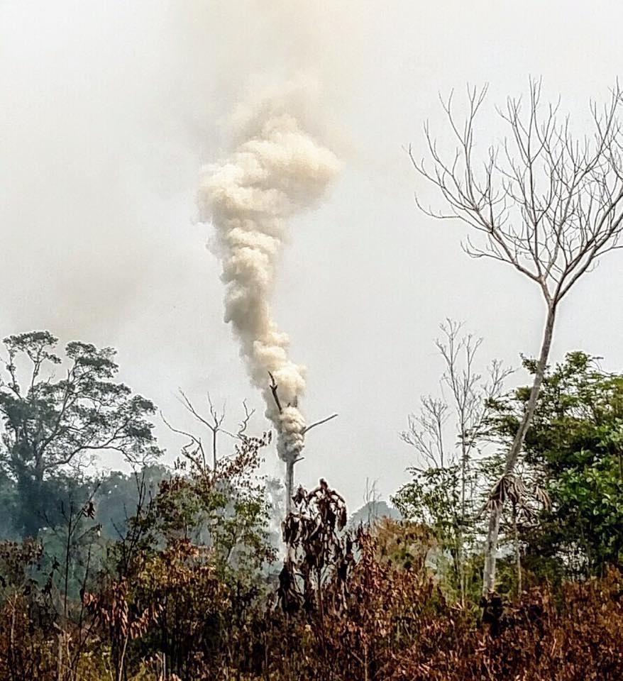 A castanheira incendiada na floresta amazônica. Foto Transmazonica25