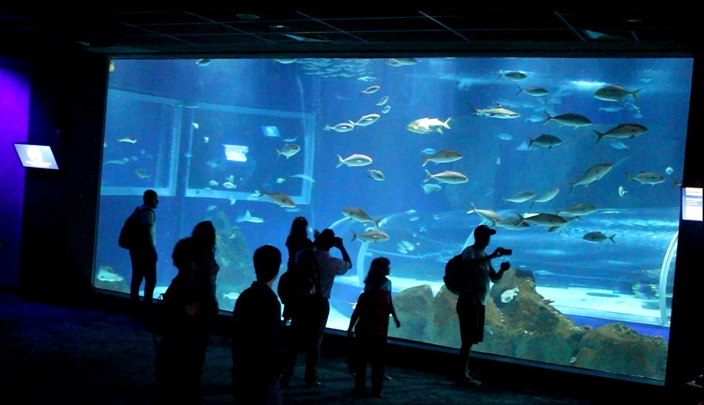 Além das visitas ao AquaRio e ao Zoológico, o Sessão Azul já realizou cerca de 130 sessões especiais de cinema. Foto Claudia Silva
