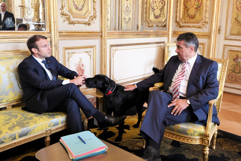 O cachorro Nemo participa de uma reunião com o presidente da França, Emmanuel Macron. Foto: Alain Jocard/ AFP