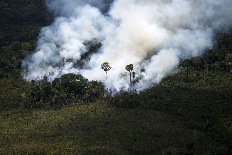 Área de exploração ilegal de madeira na Amazônia flagrada por uma operação do Greenpeace. Foto Raphael Alves/AFP