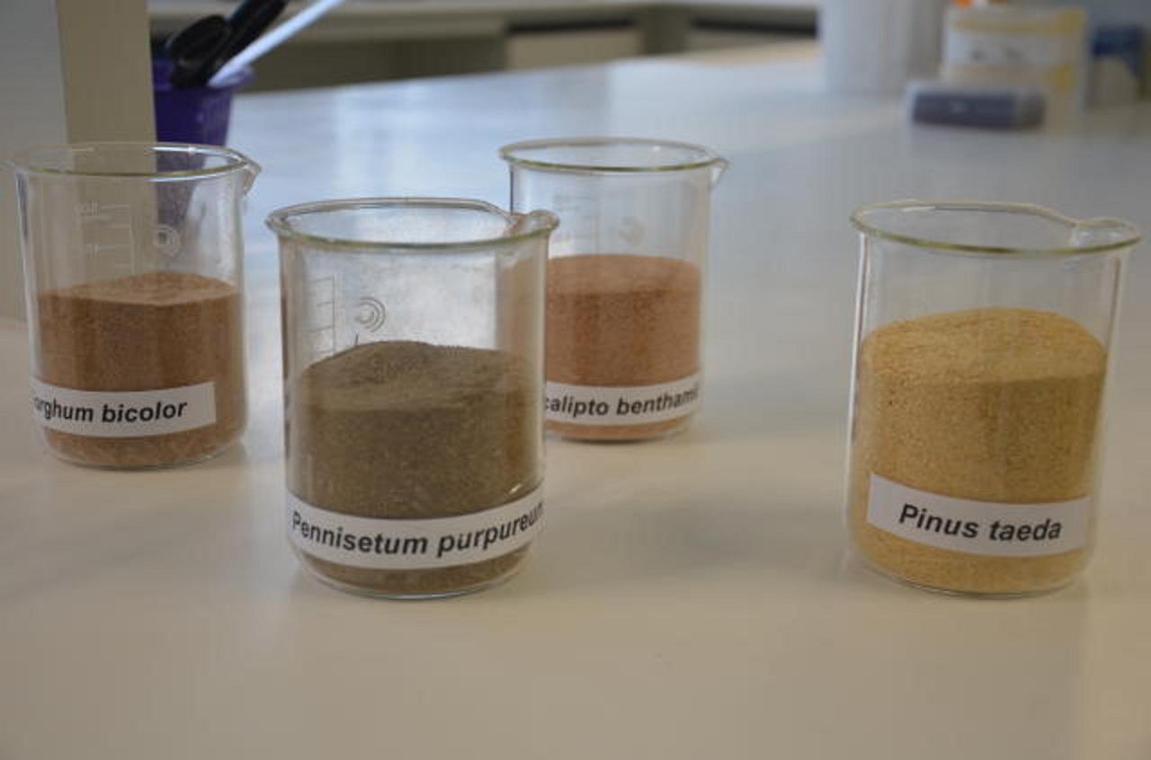Biomassas utilizadas pela Embrapa nas pesquisas de matérias-primas para produção de etanol celulósico (2G). Foto Vivian Chies/Embrapa