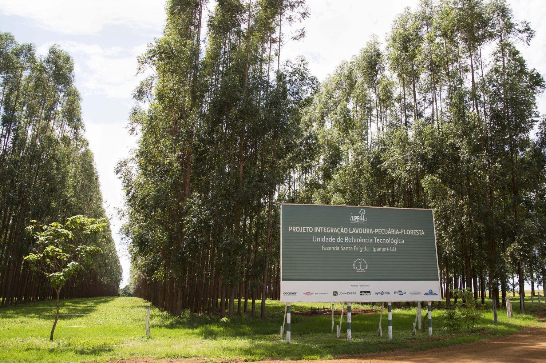 Ao adotar o sistema Lavoura-Pecuaria-Floresta, Fazenda Santa Brigida promoveu uma revolucao no campo. Foto de Simone Marinho