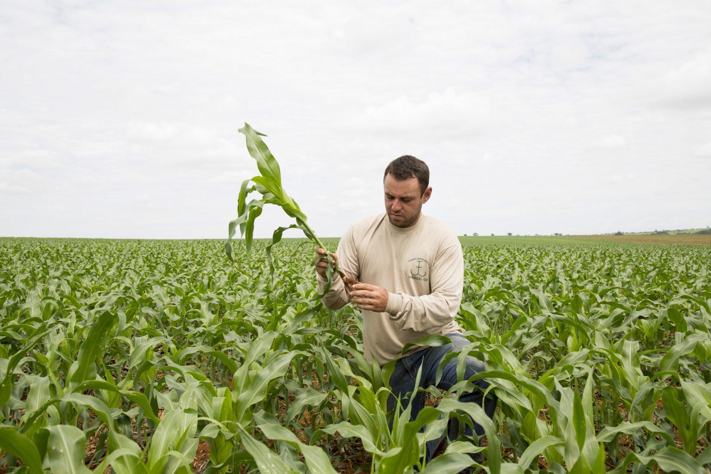 Alex Silva, gerente operacional da fazenda, na plantacao de milho.