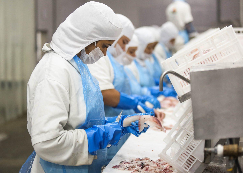 Processamento do pescado na empresa Ambar-Amaral: concentração da linha de produção foi avanço (Foto: Fernando Maia)