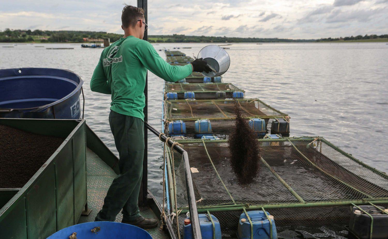 Funcionário alimenta peixes: o controle da distribuição da ração é fator para proteger ambiente (Foto: Fernando Maia)