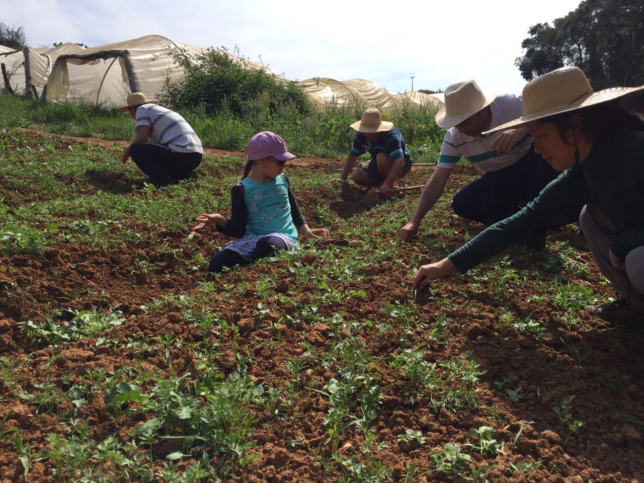 Os consumidores visitam os agricultores e aprendem também a plantar (Foto Evelyn Cianfarano)