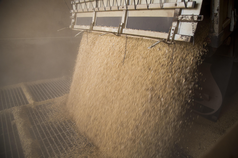 Descarga de soja sendo entregue na Caramuru, em Ipameri, Goias. Foto de Simone Marinho