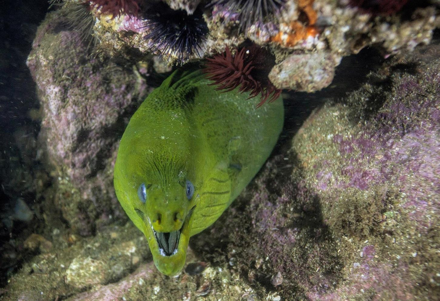 Um dos muitos tesouros descobertos por Ricardo Gomes na Baía de Guanabara. Foto Divulgação