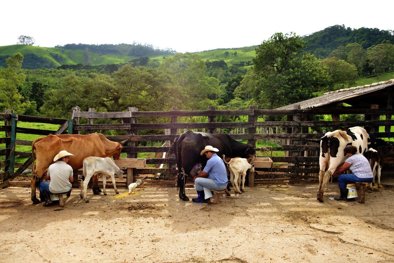 Familia Frois tirando leite. Foto de Mirian Fichtner