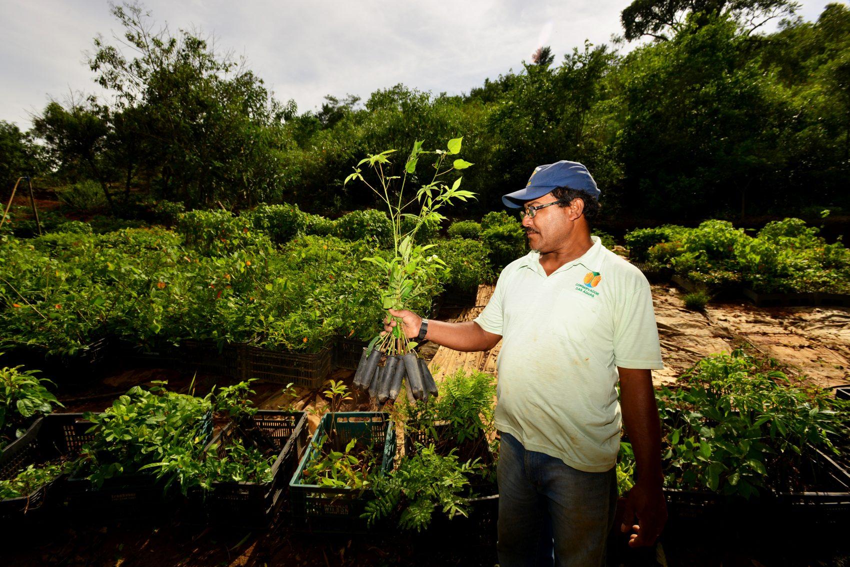 Viveiro de mudas do projeto Conservador das Águas. Foto de Mirian Fichtner