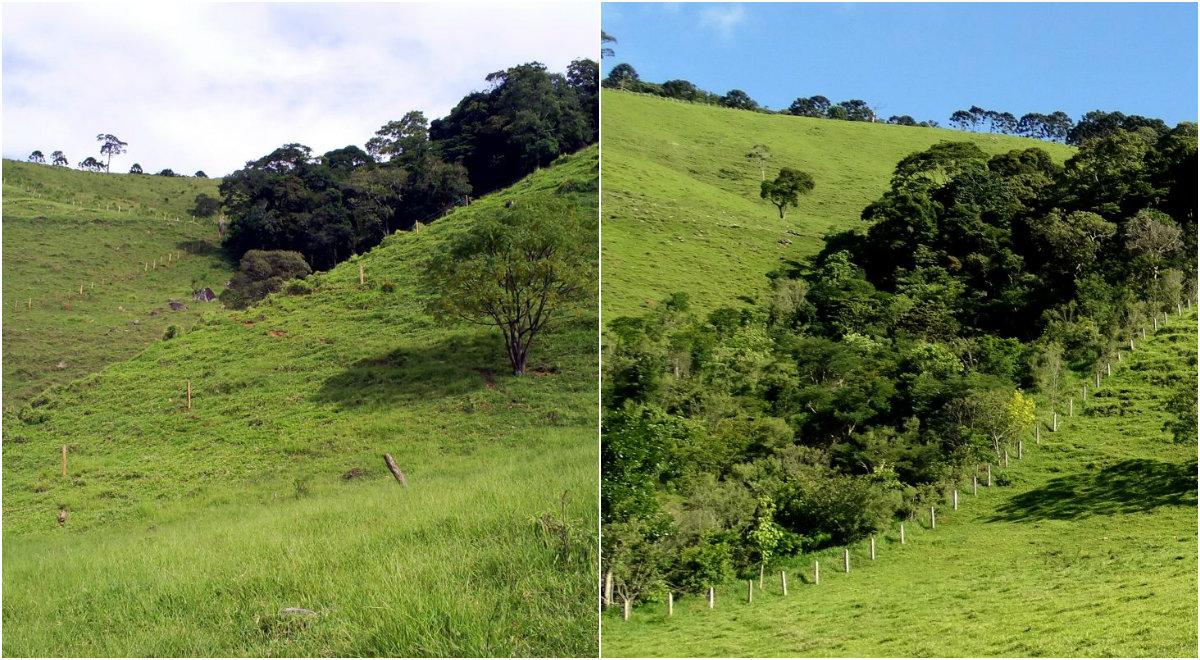 Imagens de fazenda em Extrema antes e depois do reflorestamento. Foto de Divulgacao