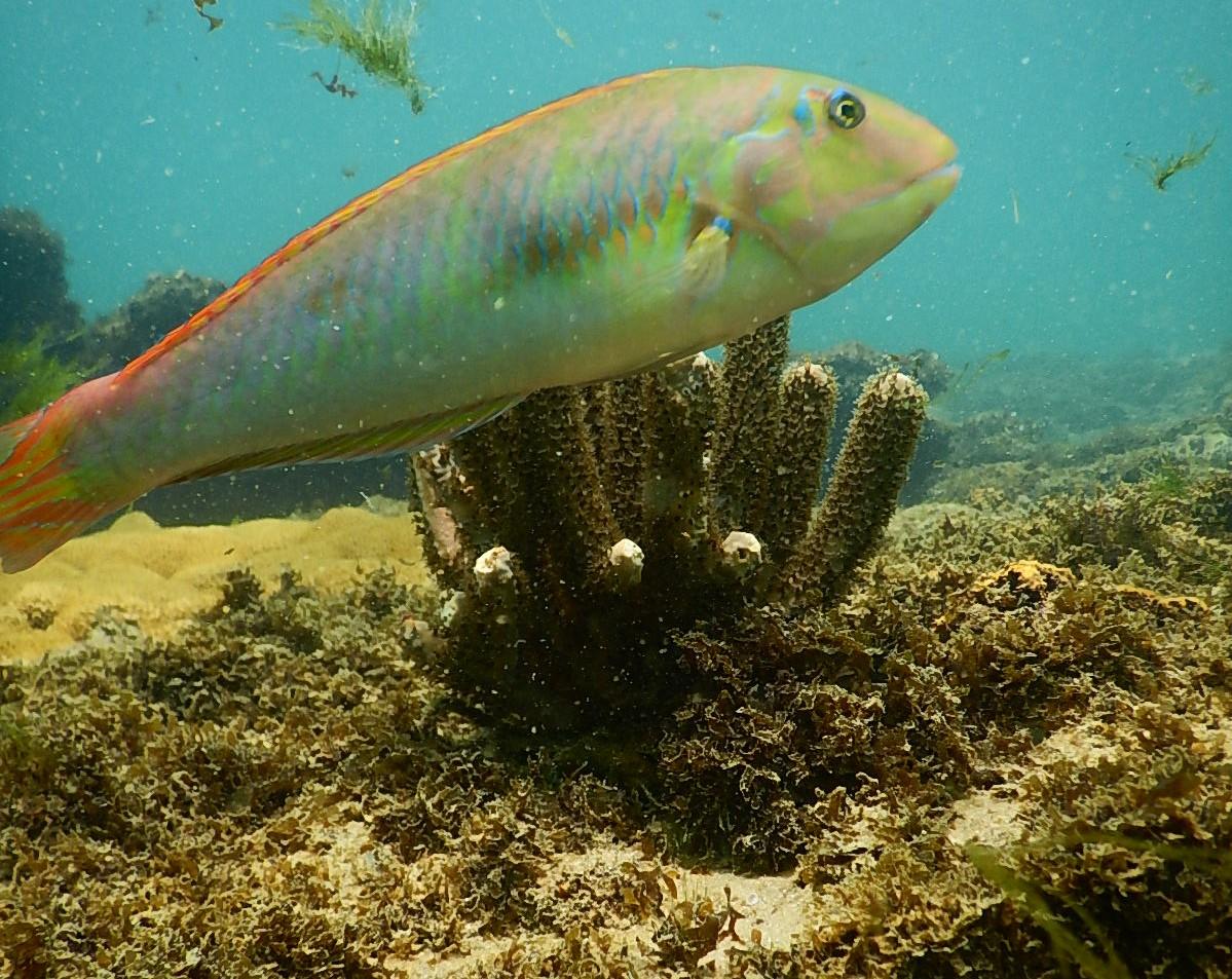 Vida marinha: objetivo é a preservação. Foto: Galeão Sacramento, Escola e Operadora de Mergulho