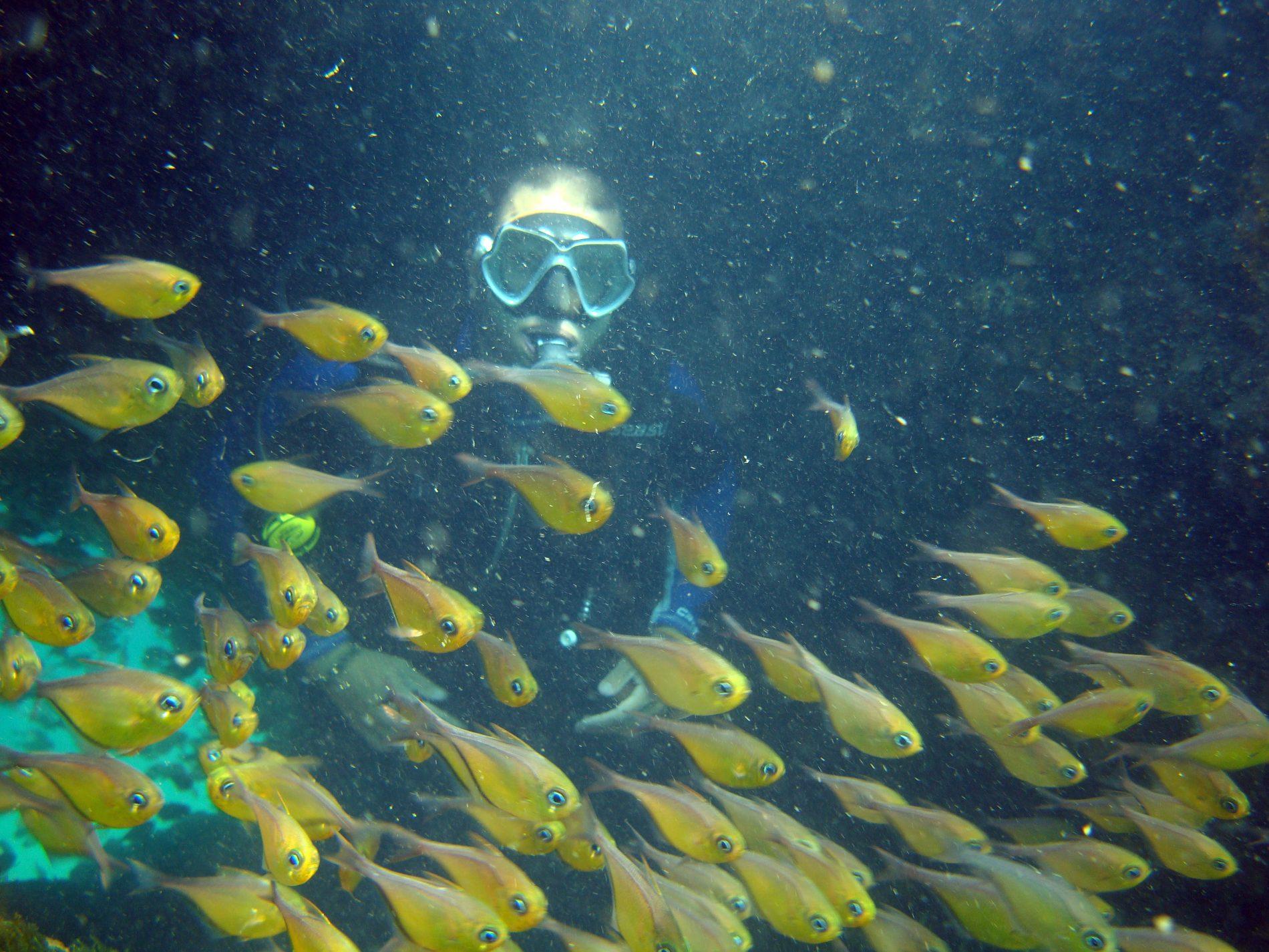 Mergulhador observa Cardume no fundo da Baía de Todos os Santos: população de peixes vai aumentar