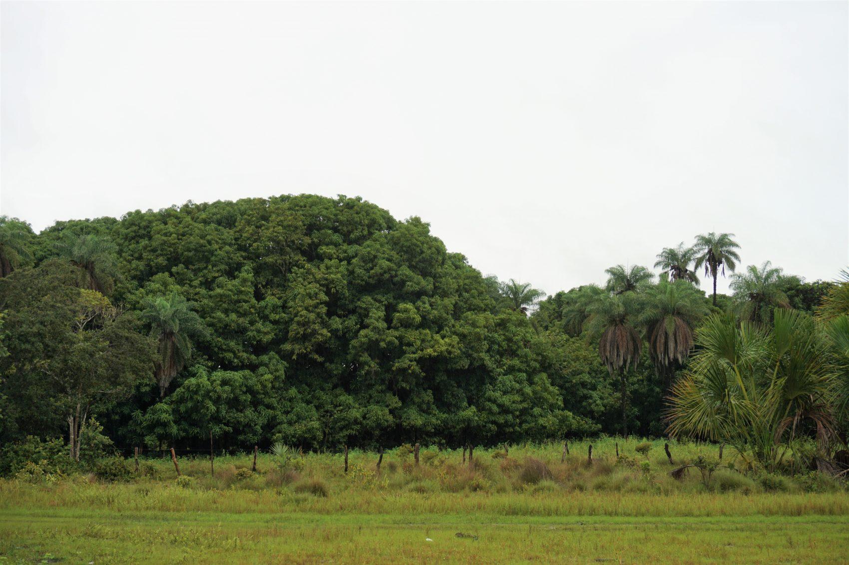 Cerrado: áreas ameaçadas pela ação de especuladores estrangeiros (Foto Alícia Prager)