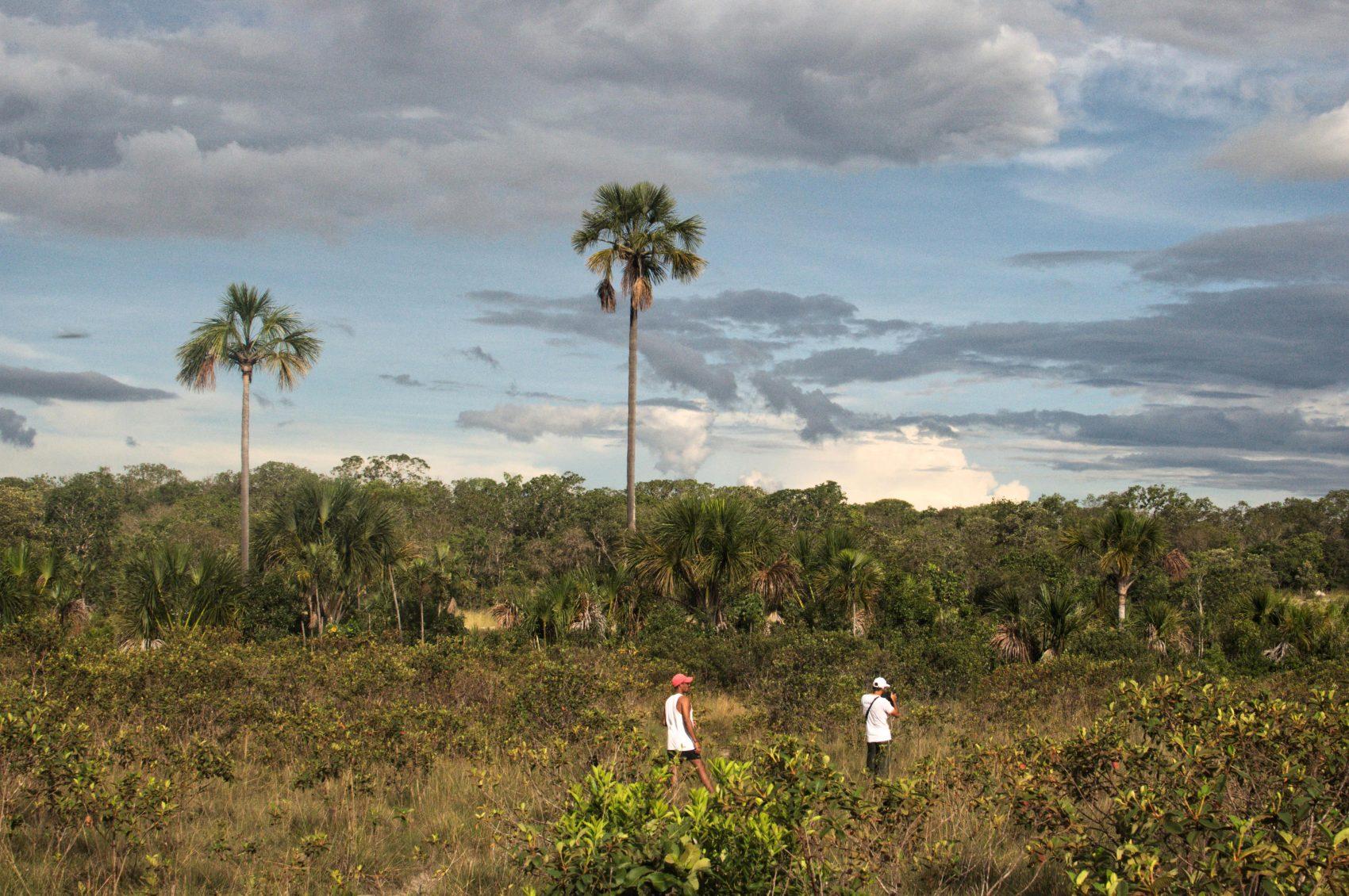 Os tons do céu do Cerrado: bioma precisa de mais proteção (Foto Flavia Milhorance)