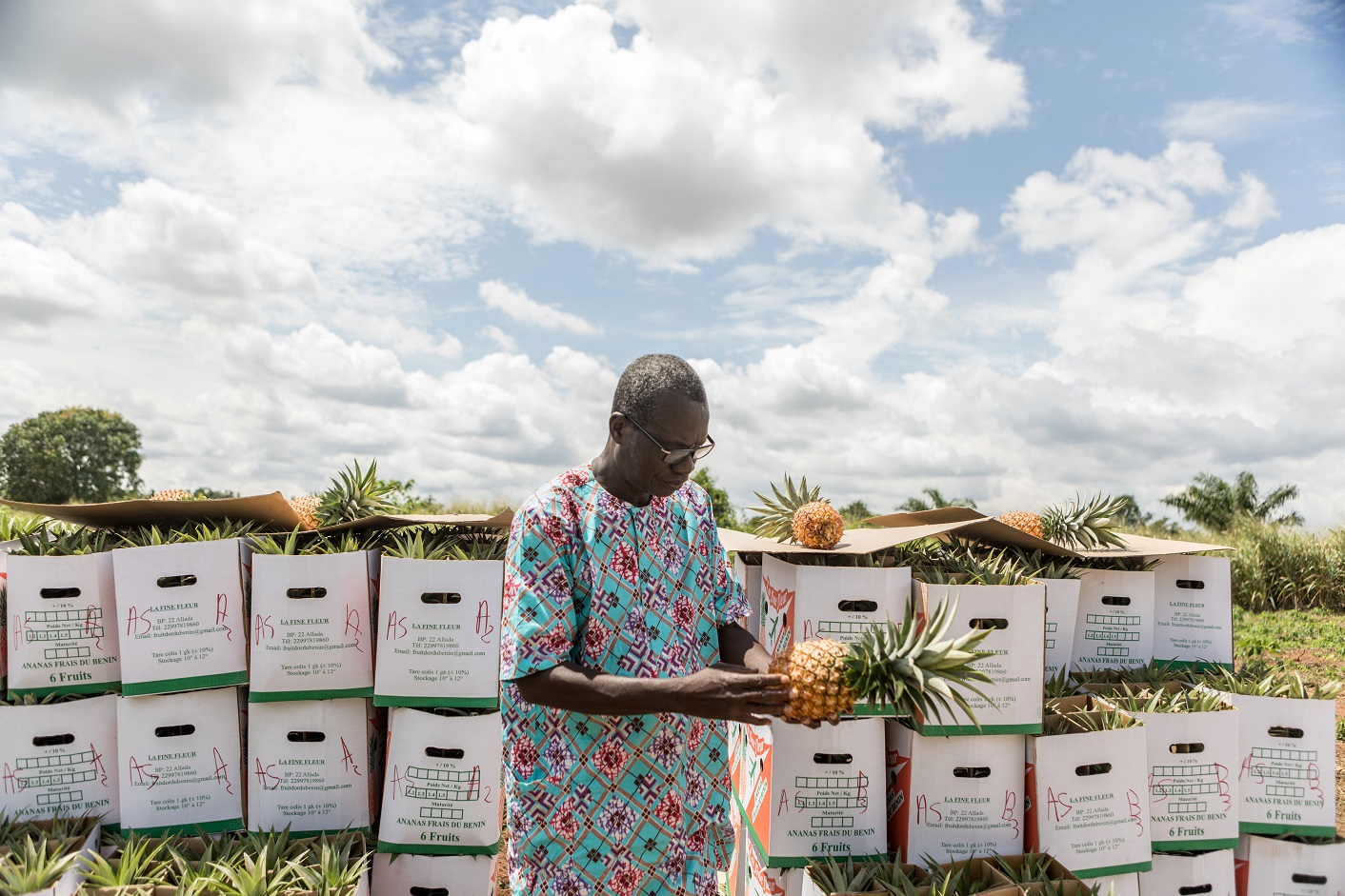 Produtor de abacaxi no Benin. O país já é um dos maiores exportadores da fruto no continente. Foto Yanick Folly/AFP