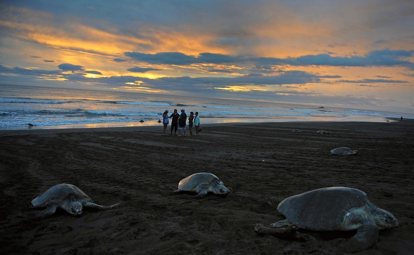 A praia de Ostional, um dos refúgios nacionalis de vida selvagem na Costa Rica. O país tem o melhor desempenho ambiental da América Latina. Foto Iuri Cortez