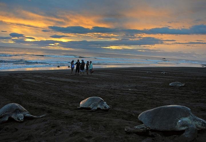 A praia de Ostional, um dos refúgios nacionais de vida selvagem na Costa Rica. O país tem o melhor desempenho ambiental da América Latina. Foto Iuri Cortez
