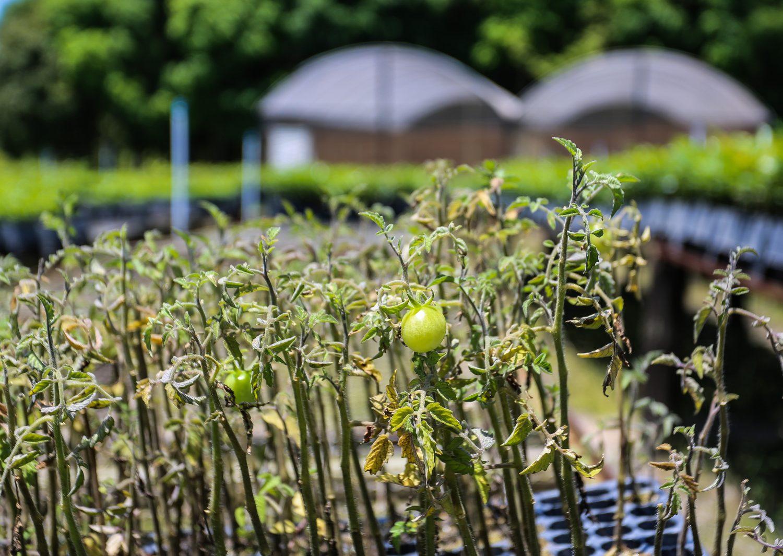 O Cadastro Ambiental Rural é uma ferramenta para combater o desmatamento e fomentar o reflorestamento (Foto Fernando Maia)