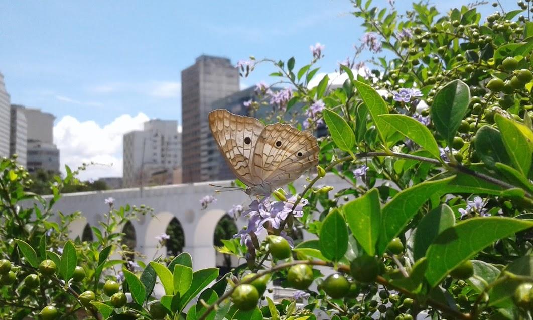 Vida nova na Praça dos Arcos. Foto: Organicidade/Divulgação