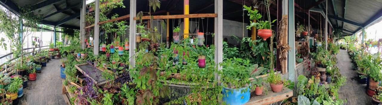 A horta na Fundição Progresso. Foto: Organicidade/ Divulgação