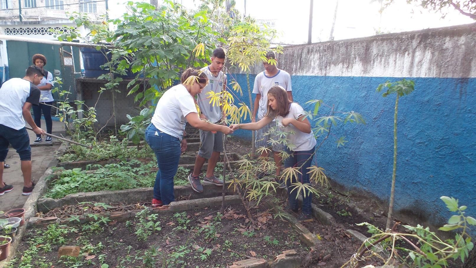 Alunos do Colégio Estadual Brigadeiro Schorcht, na Taquara, cuidam das verduras plantadas por eles. Foto Elizabeth Oliveira