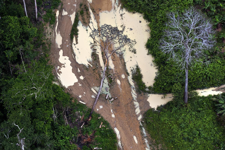 Desmatamento ilegal na área de Uruará, no Pará. Foto Marizilda Cruppe/Greenpeace