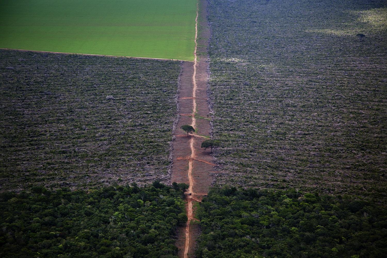 Área de floresta desmatada no Mato Grosso, próxima ao município de Nova Ubiratã. Foto Marizilda Cruppe/Greenpeace