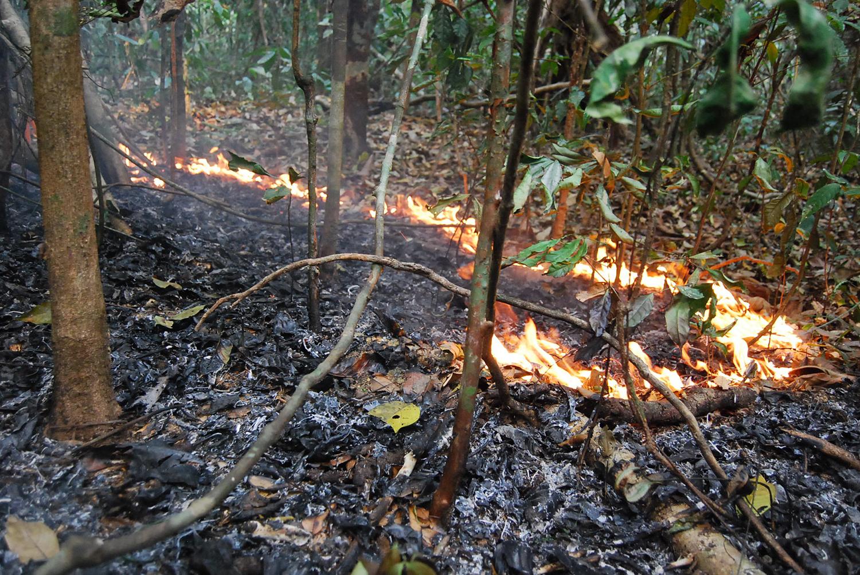 Incêndio florestal em 2015, na região de Santarém, Pará (Foto Erika Berenguer)