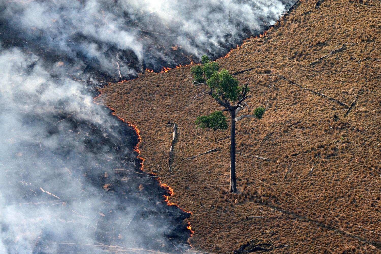 Incêndios em florestas tropicais úmidas podem reduzir significativamente a biomassa florestal por décadas. Foto Rodrigo Baleia/Greenpeace
