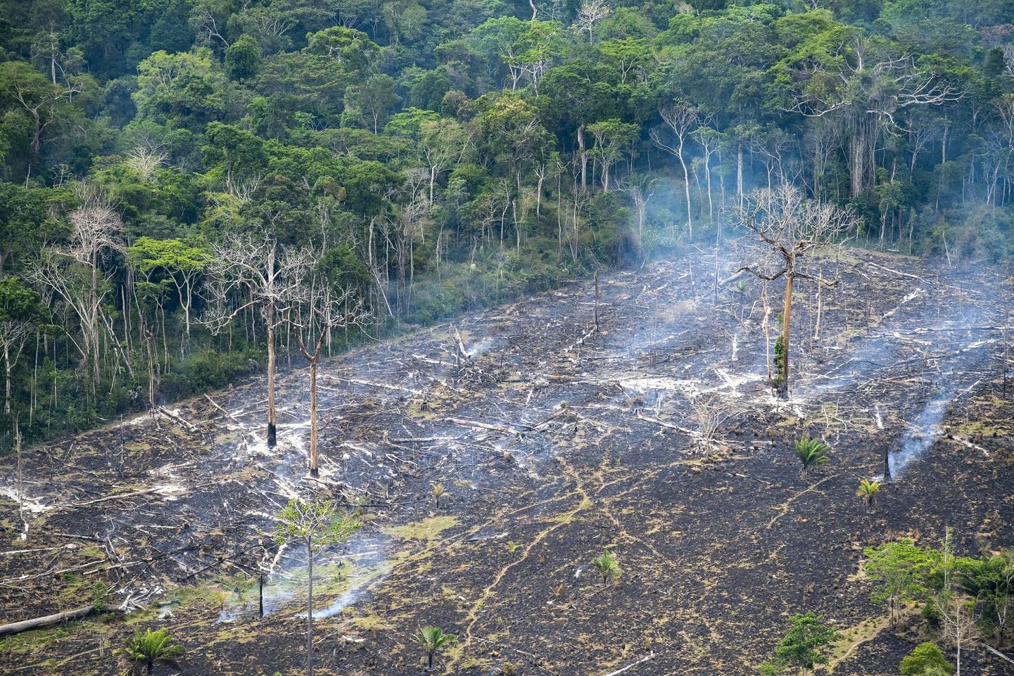 Área de desmatamento ilegal, em Marabá, no Pará. Reflorestamento é uma oportunidade para as empresas. Foto Notimex.