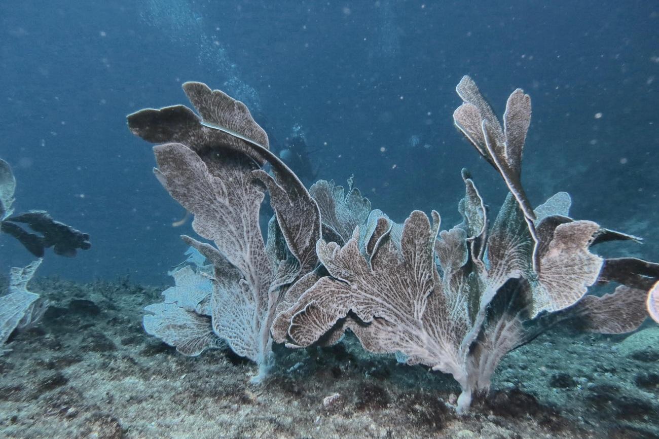 Os corais despertam curiosidade e encantamento, mas nem sempre são compreendidos. Foto Arquivo BrBio