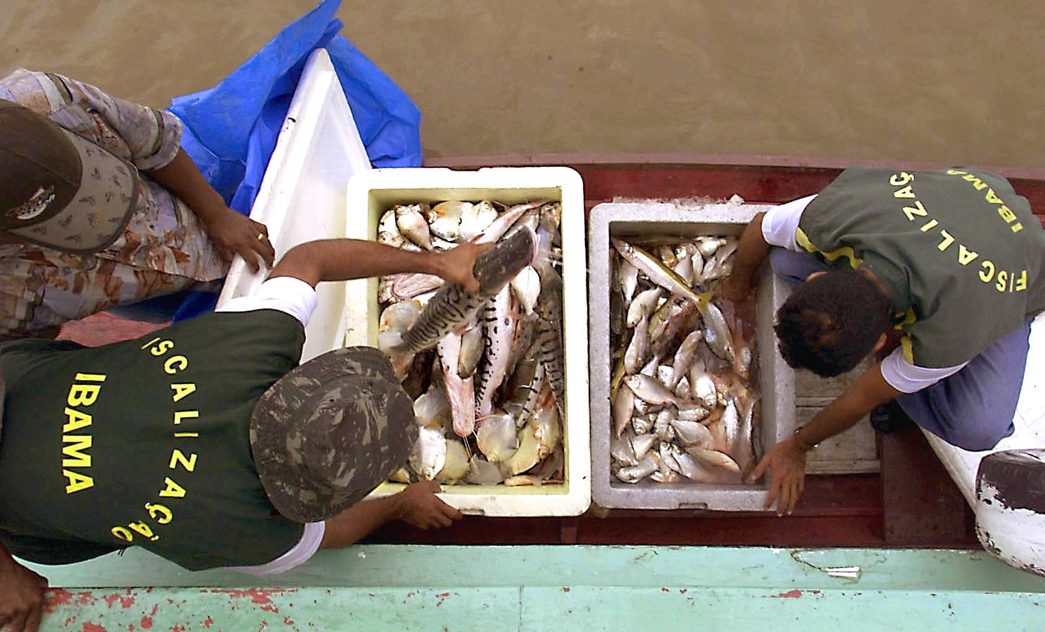 Agents of the Instituto Brasileno de Medio Ambiente (IBAMA) inspect a boat of indigenous brazilian Ticunas, 28 October 2000, in Rio Javari, on the border with Peru, and in front of the city of Tabatinga, Brazil. The IBAMA controls fishing in the region in order to prevent extinction.AFP PHOTO/Antonio SCORZA Agentes deI Instituto Brasileno de Medio Ambiente (IBAMA) inspeccionan a un barco de indigenas brasilenos Ticunas, el 28 de octubre de 2000 en el Rio Javari, en la frontera fluvial con Peru, y frente a la ciudad de Tabatinga, en la Amazonia, Brasil. El IBAMA trata de controlar la pesca en la region preservando especimenes como el Tucunare (en la foto), caracterisico de estas aguas, amenazado de extincion. AFP PHOTO/Antonio SCORZA (Photo by ANTONIO SCORZA / AFP)Agents of the Instituto Brasileno de Medio Ambiente (IBAMA) inspect a boat of indigenous brazilian Ticunas, 28 October 2000, in Rio Javari, on the border with Peru, and in front of the city of Tabatinga, Brazil. The IBAMA controls fishing in the region in order to prevent extinction.AFP PHOTO/Antonio SCORZA Agentes deI Instituto Brasileno de Medio Ambiente (IBAMA) inspeccionan a un barco de indigenas brasilenos Ticunas, el 28 de octubre de 2000 en el Rio Javari, en la frontera fluvial con Peru, y frente a la ciudad de Tabatinga, en la Amazonia, Brasil. El IBAMA trata de controlar la pesca en la region preservando especimenes como el Tucunare (en la foto), caracterisico de estas aguas, amenazado de extincion. AFP PHOTO/Antonio SCORZA (Photo by ANTONIO SCORZA / AFP)
