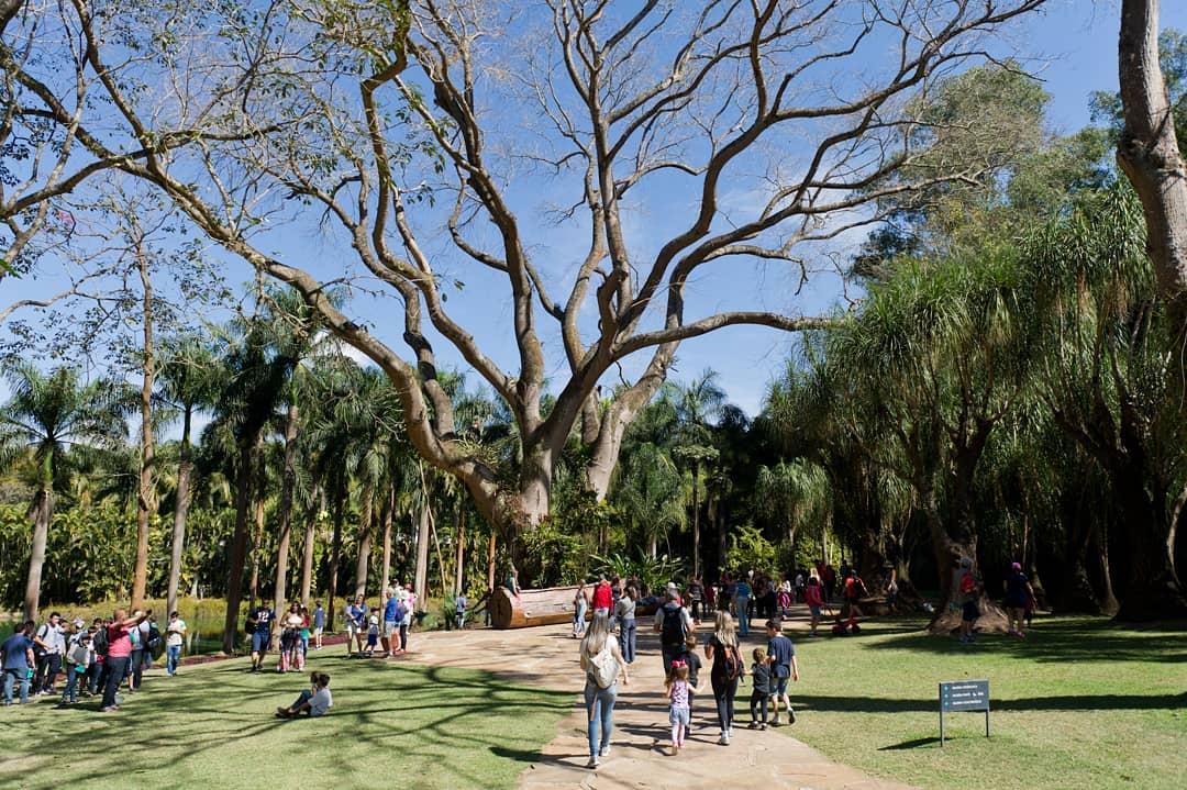 Inhotim: museu a céu aberto reúne arte contemporânea, jardim botânico e educação (Foto: Reprodução Instagram @inhotim)